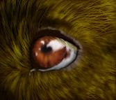 Labrador Eye by DreamLyssa