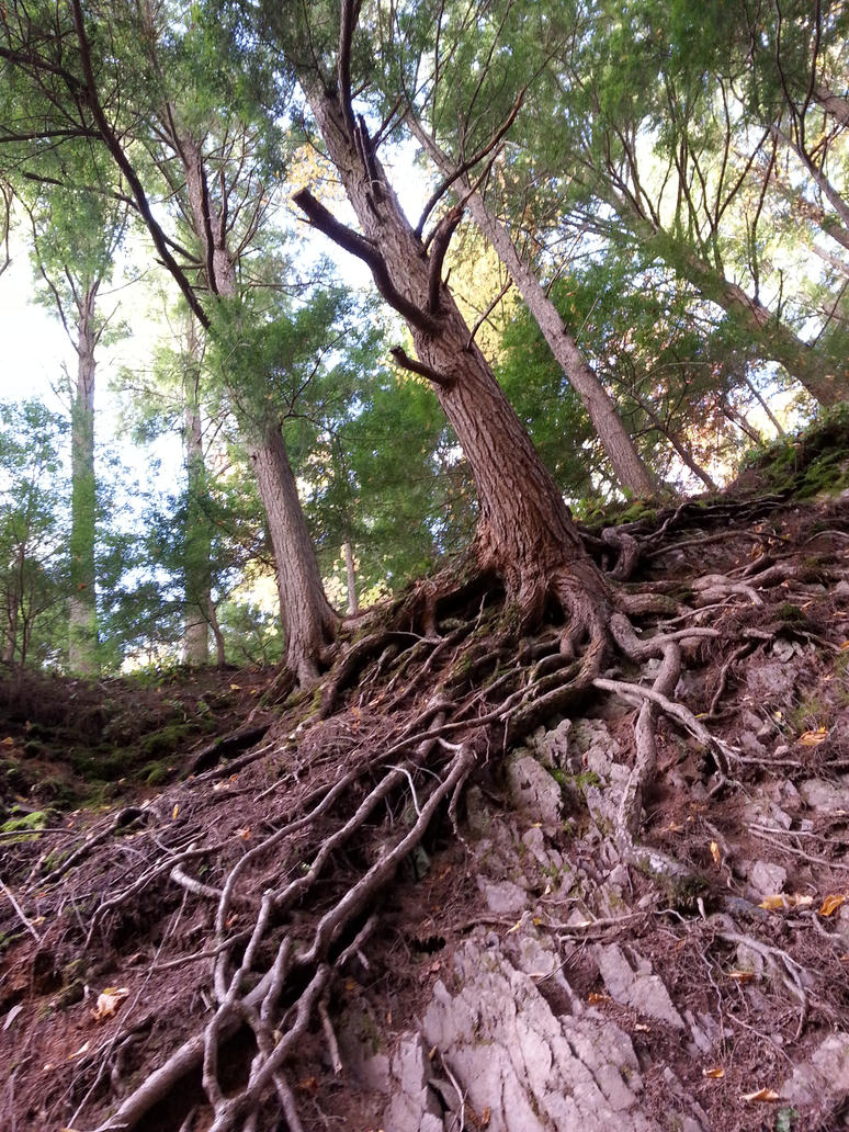 Tree Roots Stretching - Victoria Park, Truro, NS by Naryndel