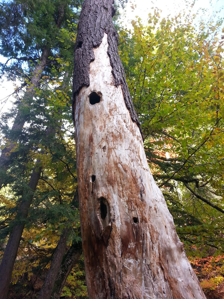 Woodpecker Tree Holes - Victoria Park, Truro, NS by Naryndel