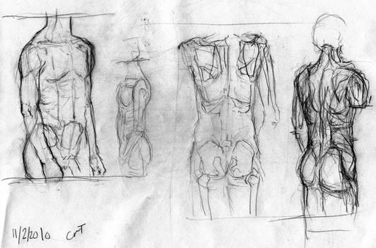Sketches: Anatomy Study