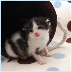 Rescue Kitten 2 by choose2bgr8