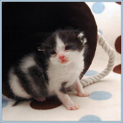 Rescue Kitten 2