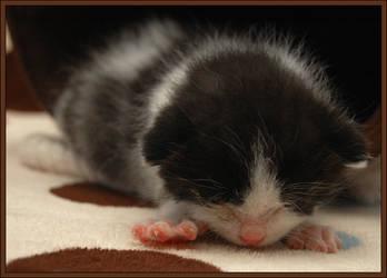 Rescue Kitten 3 by choose2bgr8