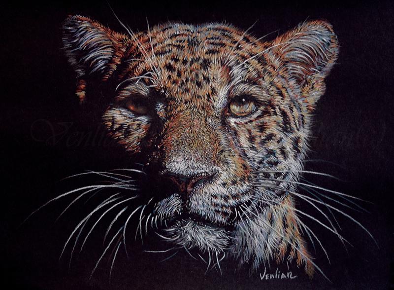 Leopard by Venlian