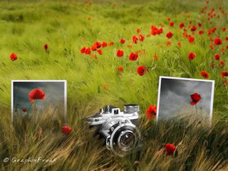 Flower Field by GraphixFreak