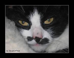 Cute Cat V
