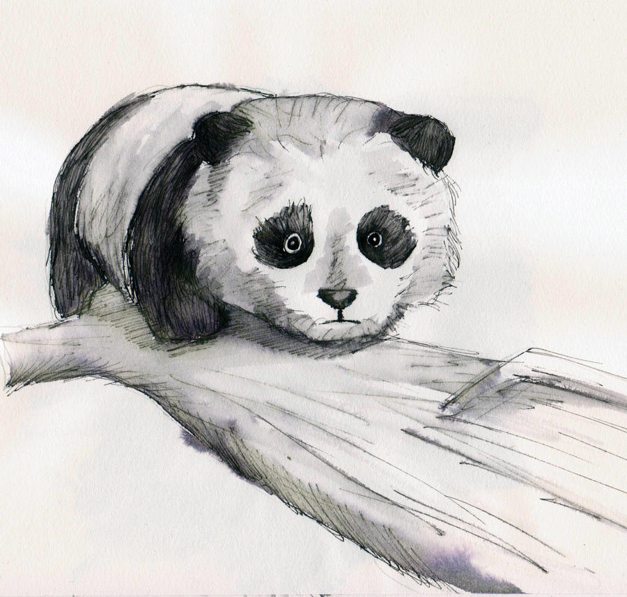 Панды картинки нарисованные карандашом