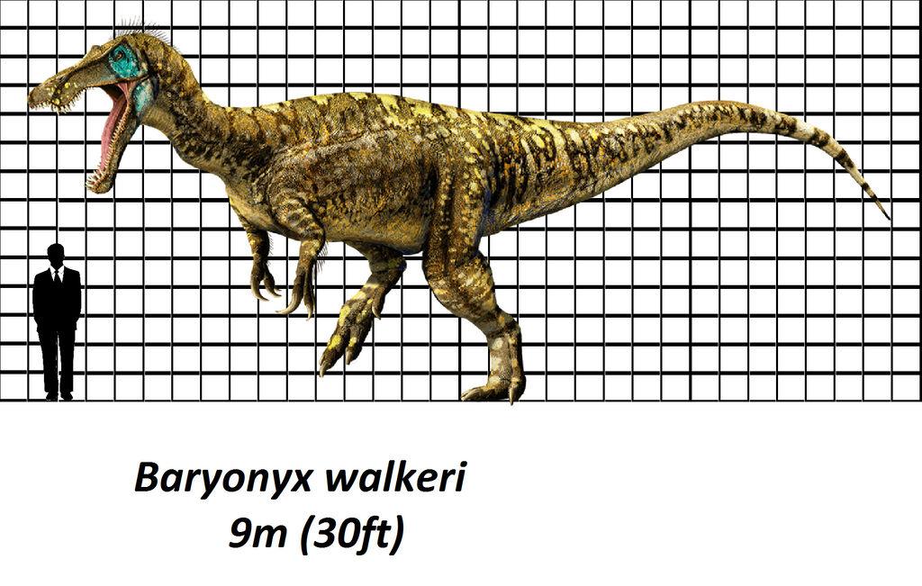 Jurassic Park Baryonyx Size Chart By Brenton522 On Deviantart