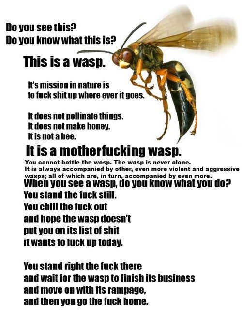 THIS IS A FUCKING WASP by Helwan