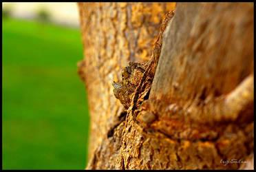 tree bark by LeightonLee