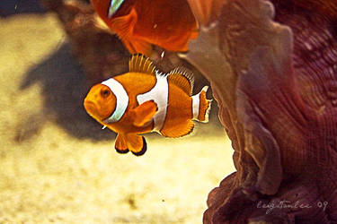 clownfish by LeightonLee