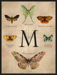 Illuminated Moths
