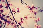 Love is in the air by betyzuzukid