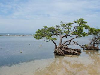 Caribbean Sea by AnimalCO