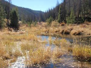 Colorado Trout Water