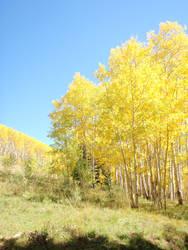 Colorado Elk Country by AnimalCO