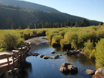 Colorado Trout Stream by AnimalCO