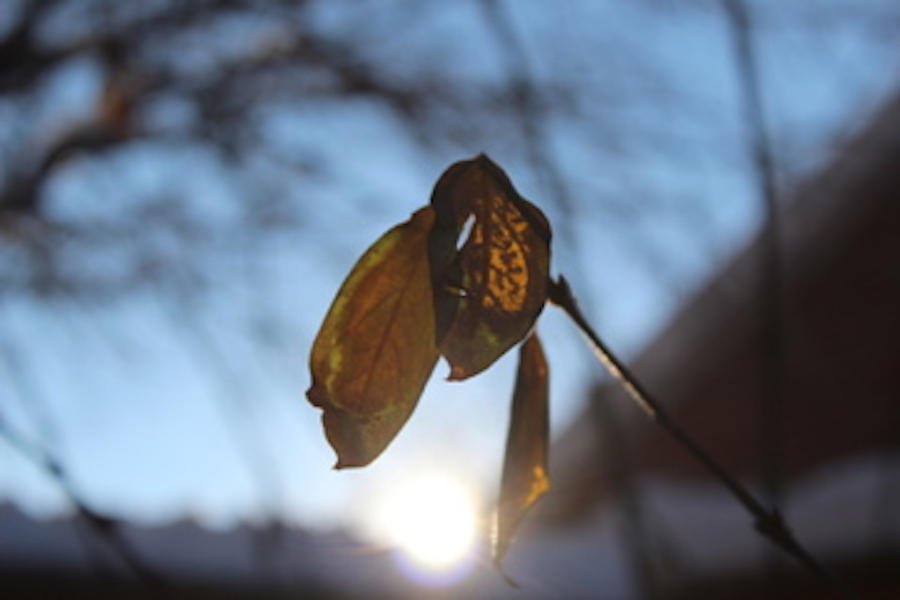 Yellow Leaf by MandaIrene