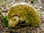 foscillized snail