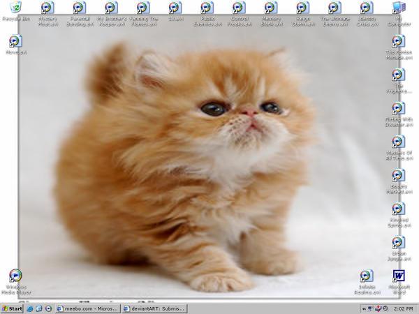 Kitty Say Hi