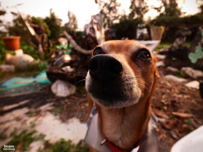 Curious nose by noamanga