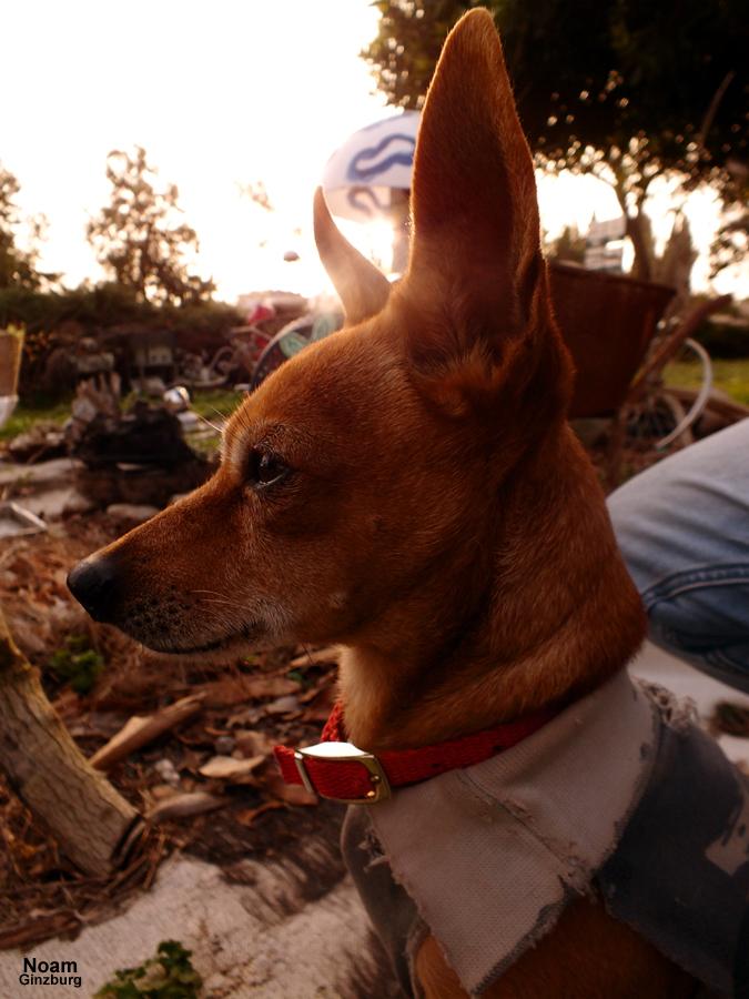 Waiting dog by noamanga