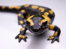 Salamander 2 by Andryna
