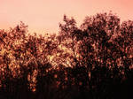 Trees in the Evening 2