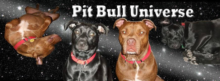 Pit Bull Universe