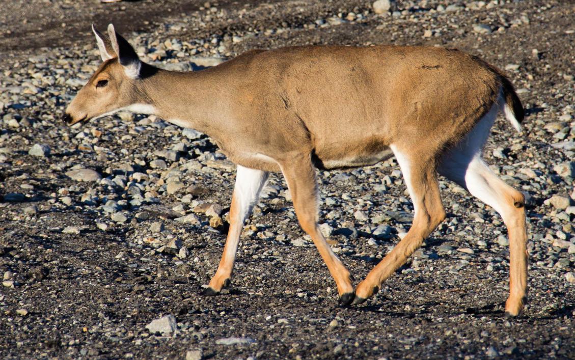 Deer by UberPickleMonkey