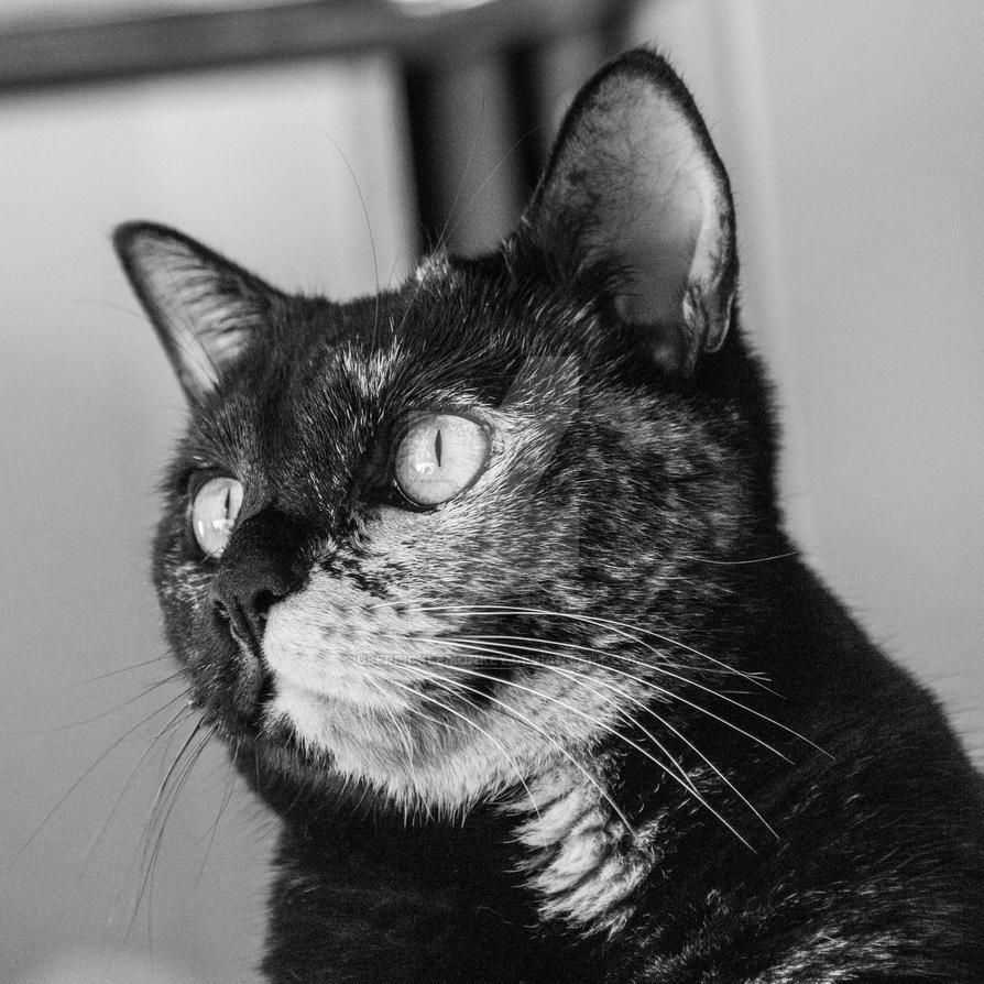 Poppy - Black and White Portrait by UberPickleMonkey