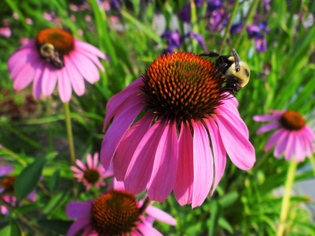 Buzz away by SPRINGWINTRCOLLISION