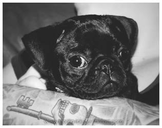 I Pug You...ummm...Love You by goRillA-iNK