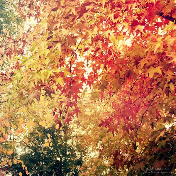 Outside My Window... by goRillA-iNK