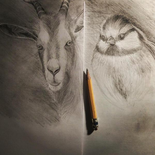 Pencil Rendering Practice by goRillA-iNK