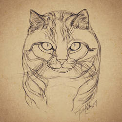 Sketching Process: Cat by goRillA-iNK
