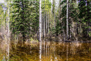 Reflective Trees 2 by oddmountain