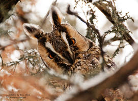 Owl 1 by putyuvitez