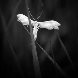 ghost by wariatka