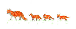 Follow The Leader Foxes by Hummingbird26