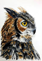 Owl by Hummingbird26