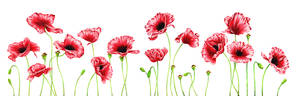 Poppies - Never Forgotten