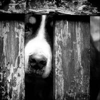 Derriere la porte by Ystery