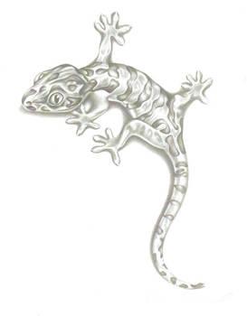 Lizard pencil drawing