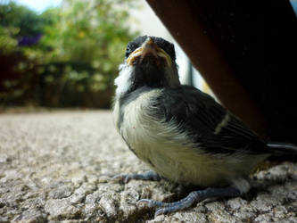 Bird by CorentinChiron