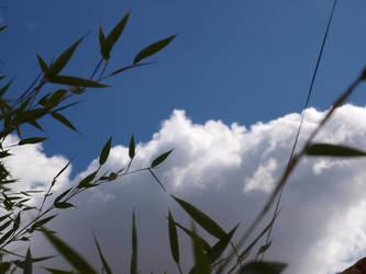 bamboo leaf by CorentinChiron