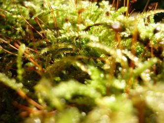 Moss by CorentinChiron