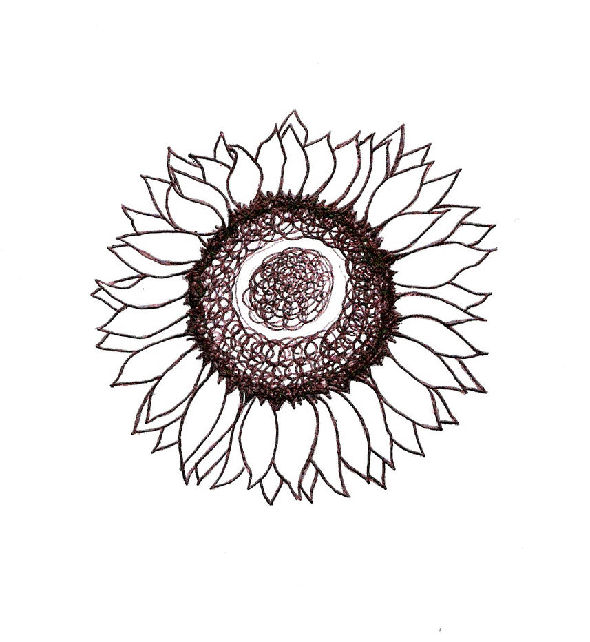 Sunflower Drawing Color Tumblr 61954 Loadtve