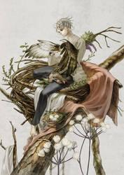 nest of the bird