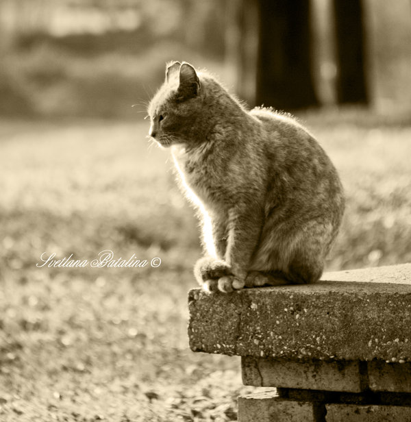 Cat-nice by Svetlana-Batalina